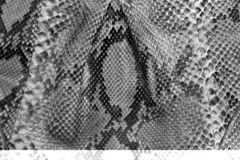 Nahtlose Schlangenhautbeschaffenheit Mode f?r tropische Reptilien Echte Pythonschlangenhaut stockfotos