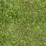 Nahtlose Sommergrasbeschaffenheit stockfotografie
