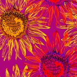Nahtlose Sonnenblume mit Grün verlässt auf rosa Hintergrund stockfoto