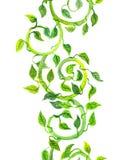 Nahtlose Streifengrüngrenze mit Rollen, Blätter watercolor Lizenzfreies Stockbild