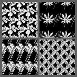 Nahtlose tropische Schwarzweiss-Blatt-Blumenvektor-Muster-Hintergrund-Tapeten-Design Lizenzfreies Stockfoto