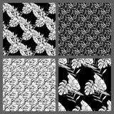 Nahtlose tropische Schwarzweiss-Blatt-Blumenvektor-Muster-Hintergrund-Tapeten-Design Lizenzfreie Stockfotografie