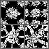 Nahtlose tropische Schwarzweiss-Blatt-Blumenvektor-Muster-Hintergrund-Tapeten-Design Lizenzfreies Stockbild