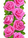 Nahtlose vertikale Grenze mit rosa Rosen Lokalisiert auf Weißrückseite Lizenzfreies Stockbild