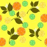 nahtlose wiederholende Auslegung mit Zitrusfrüchten Stockfoto