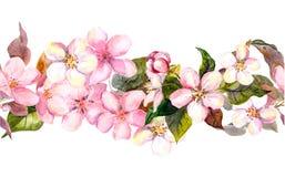 Nahtlose wiederholte Blumengrenze - rosa Kirsche Kirschblüte und Apfelblumen watercolor Stockfotografie