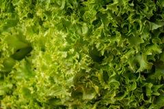 Nahtloser abstrakter Hintergrund Grüner Salat verlässt Hintergrund Frischer Kopfsalat verlässt Nahaufnahme Stockfotografie