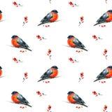 Nahtloser Aquarell Weihnachtshintergrund mit rotem Wintervogeldompfaff Lizenzfreies Stockfoto