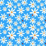 Nahtloser blauer Hintergrund mit camomiles und Marienkäfern stock abbildung