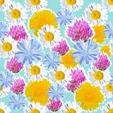 Nahtloser blauer Hintergrund mit Wiesenblumen Stockfotos