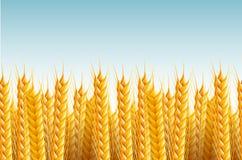 Nahtloser Feld-Hintergrund Stockfoto