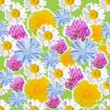 Nahtloser grüner Hintergrund mit Wiesenblumen Lizenzfreie Stockfotografie