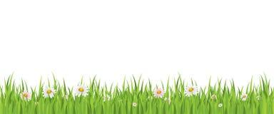 Nahtloser Hintergrund der Frühlingsblume und -grases Stockbilder
