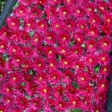 Nahtloser Hintergrund der roten natürlichen Blumen des viel Stockfotos