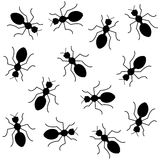 Nahtloser Hintergrund der schwarzen Ameisen Stockfoto