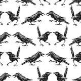 Nahtloser Hintergrund der Skizzen der Krähen und der Elster Lizenzfreie Stockfotografie