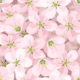 Nahtloser Hintergrund mit Apfelblüten. Stockfoto