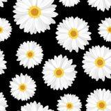 Nahtloser Hintergrund mit Gänseblümchenblumen auf Schwarzem. Stockfotos