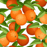 Nahtloser Hintergrund mit Orangen und Blättern. Vecto Stockbild