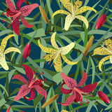 Nahtloser Hintergrund von der gelben und roten Tigerlilienblume Lizenzfreies Stockbild