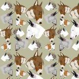 Nahtloser Muster Englischbullterrier Stockfotos