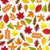 Nahtloser Musterhintergrund des bunten Herbstlaubs Würzen Sie Feiertagsdekoration, Packpapier, der Textildruck, generisch lizenzfreie abbildung