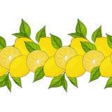 Nahtloser Rand gelbe Zitronen und Blätter stock abbildung