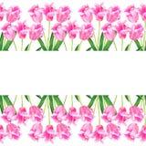 Nahtloser Rand Zacken Sie Tulpen aus Hand gezeichnete Aquarellillustration Getrennt auf wei?em Hintergrund stockfoto