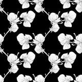 Nahtloser Schwarzweiss-Hintergrund mit blühenden Magnolienbaumasten Stockfotografie