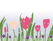 Nahtloser Vektorgrenzdruckentwurf mit Tulpenkrokussen und Traubenhyazinthen stock abbildung