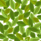 Nahtloser vektorhintergrund mit Blättern Lizenzfreie Stockfotografie