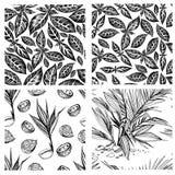 Nahtloser Vektorsatz tropische Palmenmuster stock abbildung