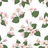 Nahtloses Blumenmuster, Apfelbaumblumen Lizenzfreie Stockfotos