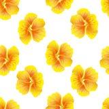 Nahtloses Blumenmuster mit Kapuzinerkäse Helle gelbe Hibiscusblumen auf weißem Hintergrund botanische Motive zerstreuten gelegent lizenzfreie stockfotografie