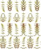 Nahtloses Blumenmuster mit Kräutern Stockbild