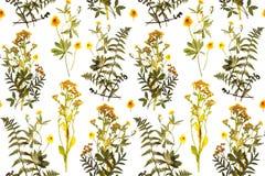 Nahtloses Blumenmuster mit Kräutern, gelbe Blumen Lizenzfreie Stockfotos