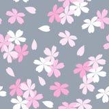Nahtloses Blumenmuster mit rosa und weißer Kirschblüte blüht auf einem grauen Hintergrund Lizenzfreie Stockbilder