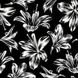 Nahtloses Blumenmuster mit weißen Blumen - Hippeastrum oder Amaryllis auf schwarzem Hintergrund vektor abbildung