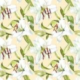 Nahtloses Blumenmuster Weiße Lilien des Aquarells, Hand gezeichnete botanische Illustration von Blumen Lizenzfreie Stockbilder