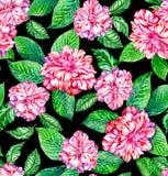 Nahtloses exotisches Blumenmuster, rosa Kamelien und tropisches leav Lizenzfreie Stockbilder