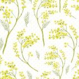 Nahtloses Frühlings-Muster mit Zweig der Mimose Stockbild