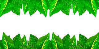 Nahtloses Grün lässt Rahmen Stockbild