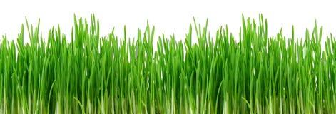 Nahtloses grünes Gras Stockfotos