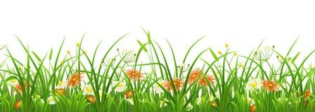 Nahtloses grünes Gras mit Blumen Stockfoto