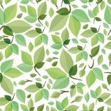 Nahtloses grünes Laub Lizenzfreie Stockfotografie