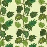 Nahtloses grünes Lianamuster. Lizenzfreie Stockbilder