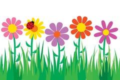Nahtloses Gras und Blumen. Stockfotos
