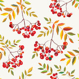 Nahtloses Herbstmuster der Ebereschenbeeren Stockfotografie