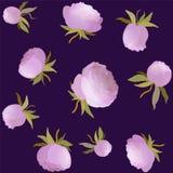 Nahtloses mit Blumenmuster der Vektorpfingstrose Rosa nette Blumenillustration Lizenzfreies Stockbild