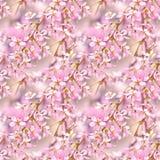 Nahtloses mit Blumenmuster des Frühlinges Nahtlose natürliche Beschaffenheit mit Blütenbaumasten Spingtime im Garten Blühende Zwe Stockbilder